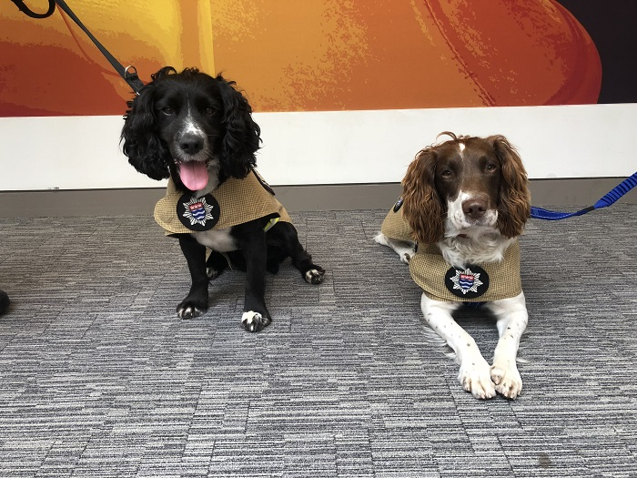 Sherlock and Simba, London Fire Brigade's two fire investigation dogs